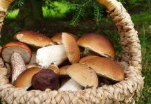 koszyk grzybów